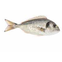 Sea bream - Sparusaurata